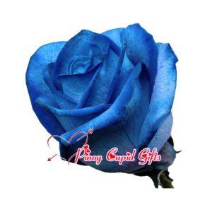 Imported Blue Ecuadorian Roses