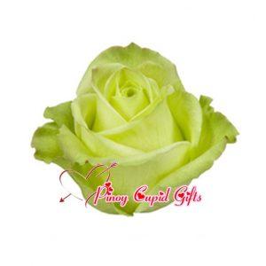 Imported Green Ecuadorian Roses