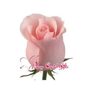 Imported Pink Ecuadorian Roses