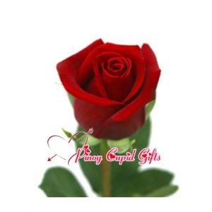 Red Ecuadorian rose