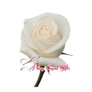 Imported White Ecuadorian Roses