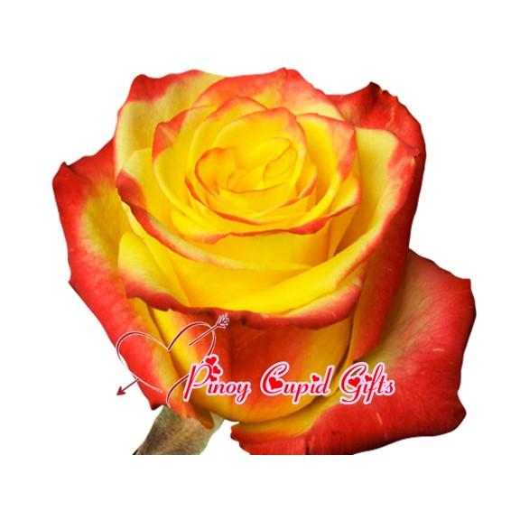 Imported long-stemmed Ecuadorian Roses