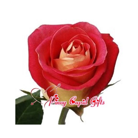 Imported Ecuadorian Roses