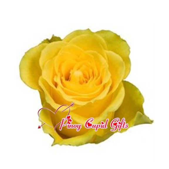 Imported Ecuadorian long-stemmed Yellow Roses