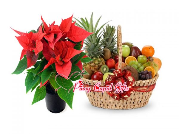 Poinsettia Christmas Flower and Fruit Basket